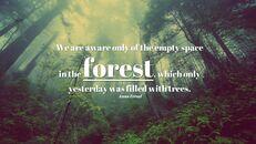 forêt_05