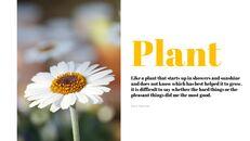 Planta_04