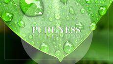 Purity_07