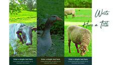 농장과 가축 파워포인트 프레젠테이션_09