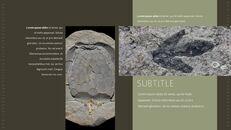 화석 템플릿 PPT_08