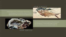 화석 템플릿 PPT_25