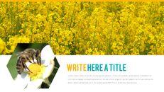 허니비(꿀벌) 간단한 디자인 템플릿_29