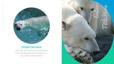 북극곰이 사는 곳 Google 프레젠테이션 템플릿_16