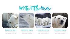 북극곰이 사는 곳 피피티 슬라이드_20