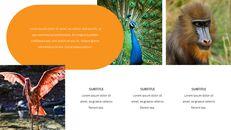 동물원 슬라이드 PPT_16