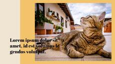 고양이 키우기 프레젠테이션_27