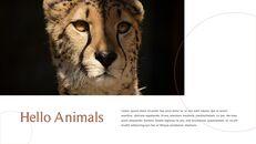 사파리 동물 프레젠테이션 슬라이드 ppt_08