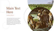 사파리 동물 프레젠테이션 슬라이드 ppt_21