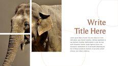 사파리 동물 프레젠테이션 슬라이드 ppt_22