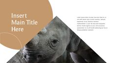 사파리 동물 프레젠테이션 슬라이드 ppt_24