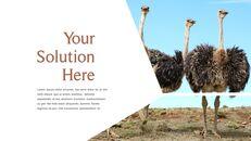 사파리 동물 프레젠테이션 슬라이드 ppt_25