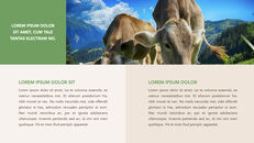 Cow Product Deck_10