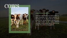 Cow Product Deck_19