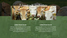 Cow Product Deck_20