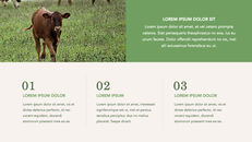 Cow Product Deck_24