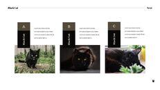 Black Cat Simple PPT Templates_03