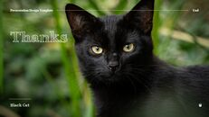 Black Cat Simple PPT Templates_37