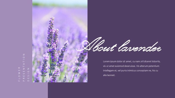 Lavender Presentation PowerPoint Templates Design_02