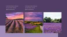 Lavender Presentation PowerPoint Templates Design_25