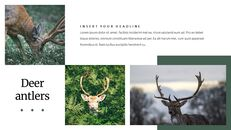 Deer Simple Google Slides Templates_03