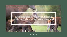 Deer Simple Google Slides Templates_26