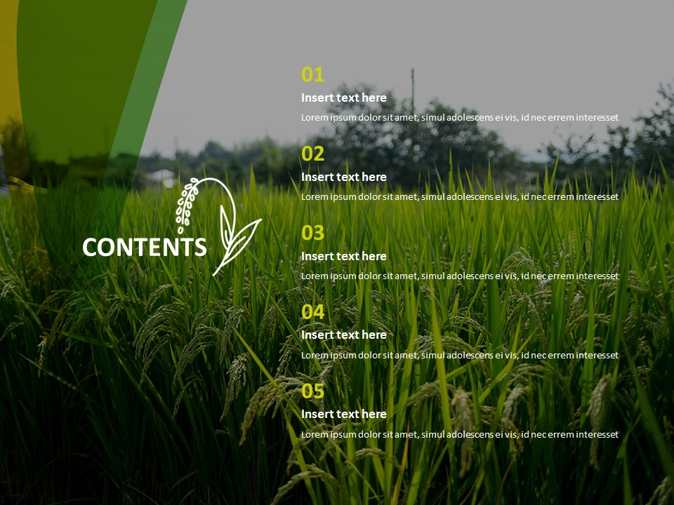 Free Powerpoint Template An Ear Of Rice