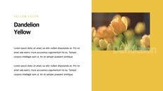 Yellow Spectrum Simple Keynote Template_06
