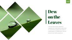 Dew Drop PowerPoint Templates Design_04