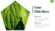 Dew Drop PowerPoint Templates Design_10