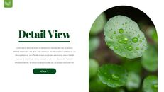 Dew Drop PowerPoint Templates Design_11