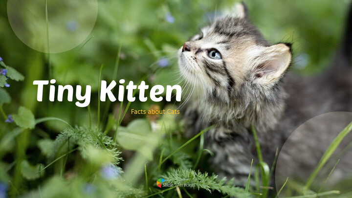 Tiny Kitten PowerPoint Business Templates_01