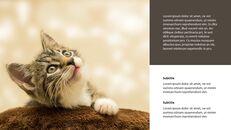Tiny Kitten PowerPoint Business Templates_05