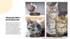 Tiny Kitten PowerPoint Business Templates_20