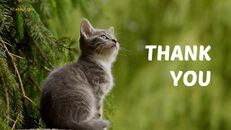 Tiny Kitten PowerPoint Business Templates_35