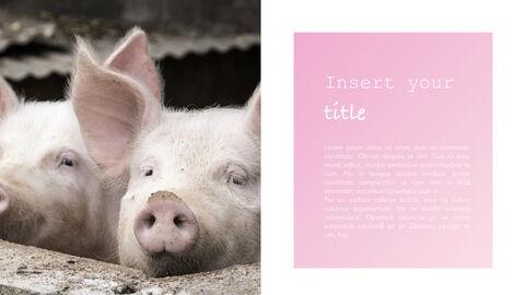 돼지의 해 심플한 키노트 템플릿_07