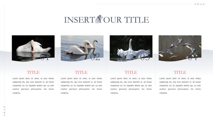 Swan Keynote Presentation Template_02