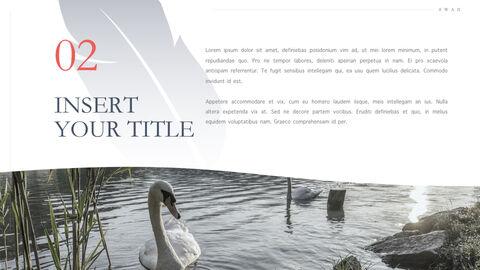 Swan Keynote Presentation Template_04
