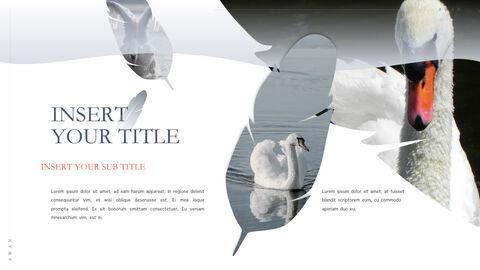 Swan Keynote Presentation Template_27