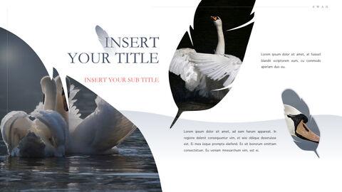Swan Keynote Presentation Template_30
