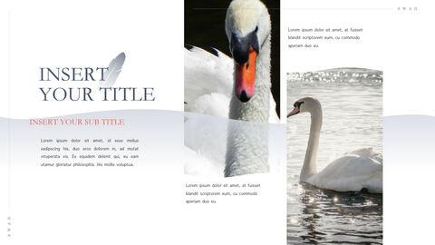Swan Keynote Presentation Template_31