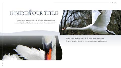 Swan Keynote Presentation Template_33