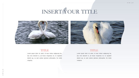 Swan Keynote Presentation Template_35