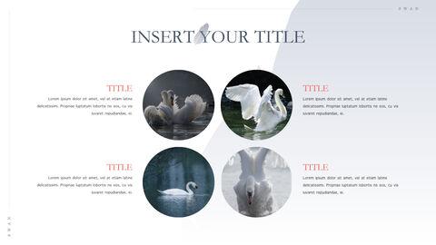 Swan Keynote Presentation Template_36