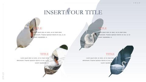 Swan Keynote Presentation Template_37