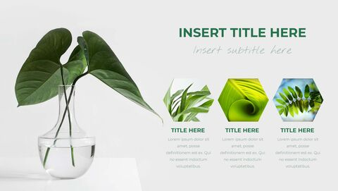 Botanical Google Slides Themes for Presentations_05