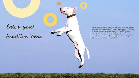 강아지 행동 분석 키노트 디자인_27