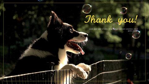 강아지 행동 분석 키노트 디자인_40