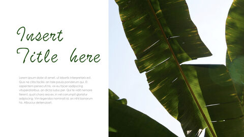 Botanical Simple Keynote Template_04