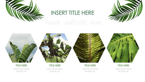 Botanical Simple Keynote Template_12